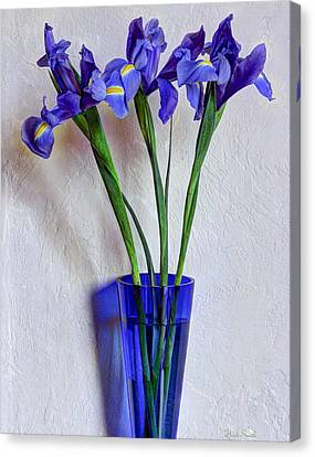 Purple. Iris. Buds Canvas Print - Who Would Have Thought I Have A Second Blue Vase by Heidi Smith