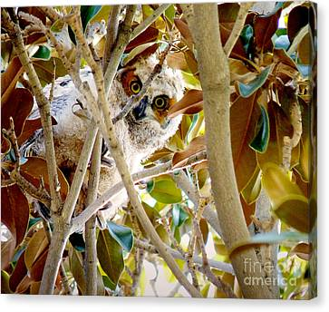 Whooo Are You? Canvas Print