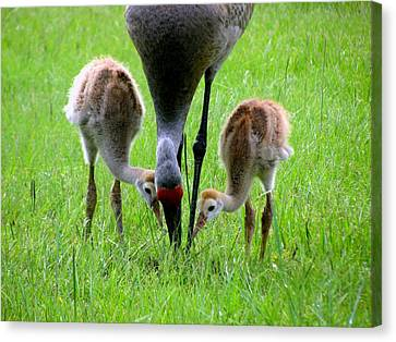 Who's First Canvas Print