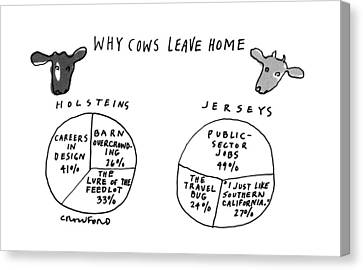 Why Cows Leave Home Canvas Print
