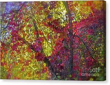 Why Do I Love Autumn So Much? Canvas Print by  Andrzej Goszcz