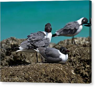 Canvas Print featuring the photograph Why You Looking? by Robert L Jackson