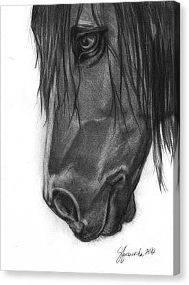 Wide Eyed Wanderer Canvas Print by J Ferwerda