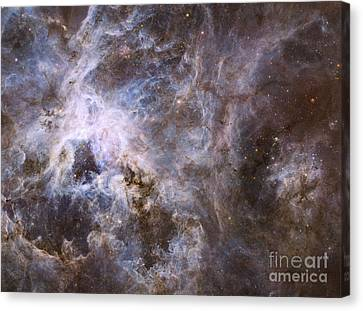 Widefield View Of The Tarantula Nebula Canvas Print by Stocktrek Images