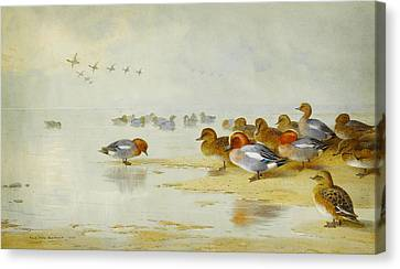 Wigeon And Teal By The Waters Edge Canvas Print by Celestial Images