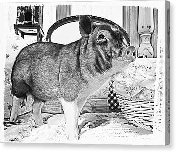 Wilber Smiles For The Camera Canvas Print
