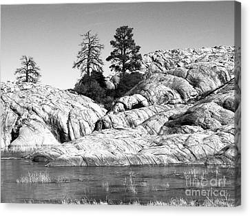 Willow Lake Number One Bw Canvas Print by Heather Kirk