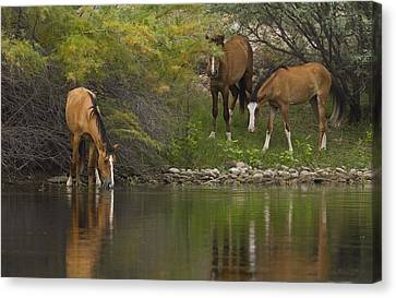Wild Along The River Canvas Print by Sue Cullumber