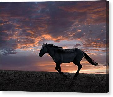 The Horse Canvas Print - Wild And Free by Leland D Howard