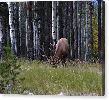 Canvas Print featuring the photograph Wild And Free by Rhonda McDougall