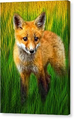 Wild And Free Canvas Print by Steve Harrington