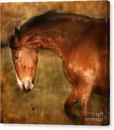 Bay Horse Canvas Print - Wild by Angel  Tarantella