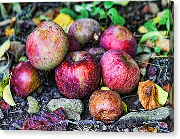 Wild Orchards Canvas Print - Wild Apples by Lee Dos Santos