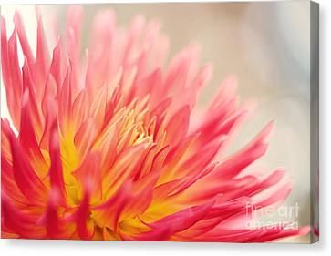 Wild At Heart Canvas Print by Beve Brown-Clark Photography