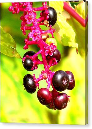 Wild Berries 2013 Canvas Print by Glenn McCurdy