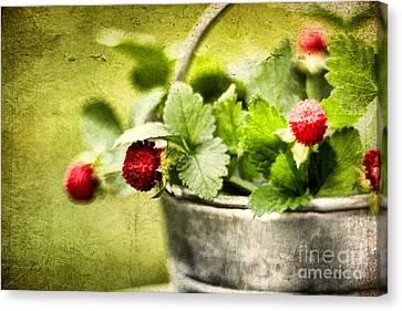 Wild Berries Canvas Print by Darren Fisher