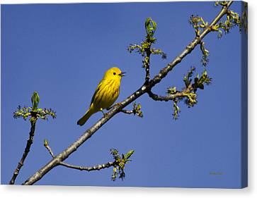 Wild Birds - Yellow Warbler Canvas Print