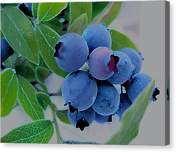 Wild  Blueberries Canvas Print by Shirley Sirois