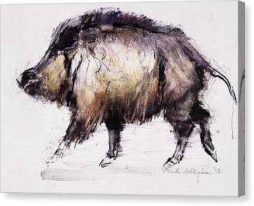 Wild Boar Canvas Print by Mark Adlington