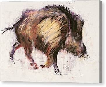 Wild Boar Trotting Canvas Print by Mark Adlington