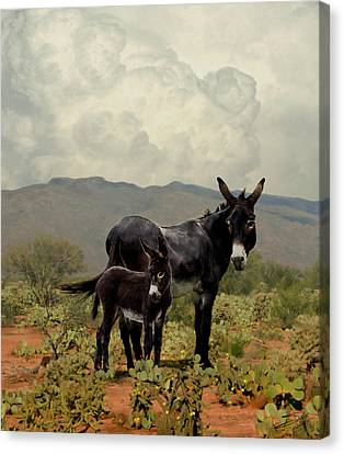 Wild Burros Of Tucson Canvas Print by Schwartz