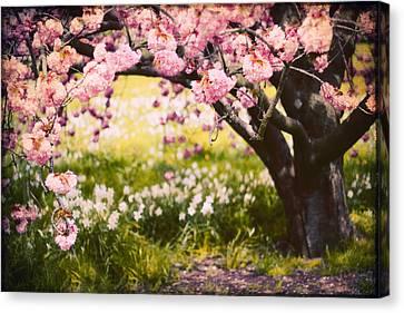 Wild Cherry Canvas Print by Jessica Jenney