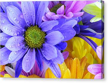 Wild Crazy Daisies 2 Canvas Print by Kenny Francis