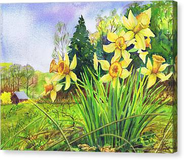 Wild Daffodils Canvas Print by Susan Herbst