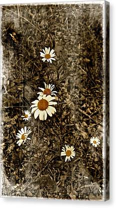 Wild Daisies Canvas Print by Bellesouth Studio
