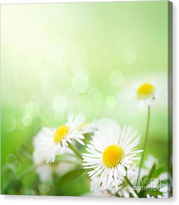 Wild Daisies Canvas Print by Mythja  Photography