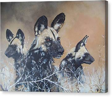 Wild Dog Trio Canvas Print by Robert Teeling