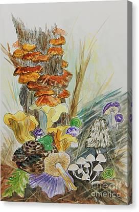 Wild Edible Mushrooms Canvas Print by Ellen Levinson