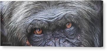 Wild Eyes - Chimpanzee  Canvas Print by Carol Cavalaris