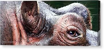 Wild Eyes - Hippo Canvas Print