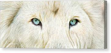 Animal Canvas Print - Wild Eyes - White Lion by Carol Cavalaris