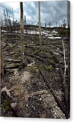 Canvas Print featuring the photograph Wild Fire Aftermath by Amanda Stadther