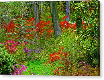 Wild Flower Garden Canvas Print by Andy Lawless