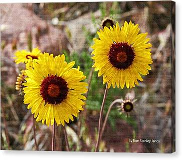 Canvas Print featuring the photograph Wild Flowers Above The Rim by Tom Janca
