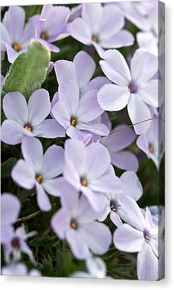 Wild Flowers Canvas Print by Bob Noble Photography