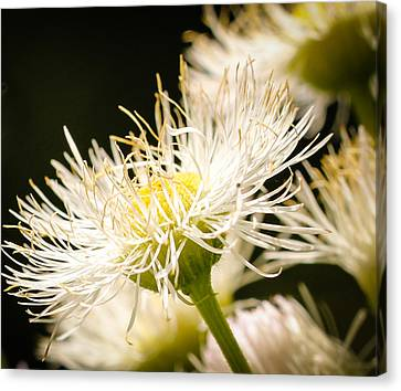 Canvas Print featuring the photograph Wild Flowers by Cathy Donohoue