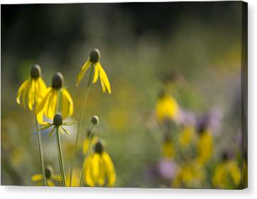 Canvas Print featuring the photograph Wild Flowers by Daniel Sheldon