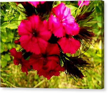 Canvas Print featuring the photograph Wild Flowers by Eric Switzer