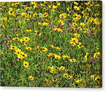 Wild Flowers Canvas Print by Tim Townsend
