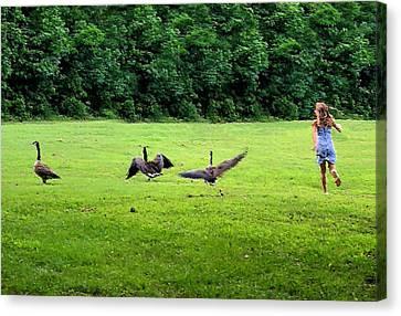 Wild Goose Chase Canvas Print by Kristin Elmquist