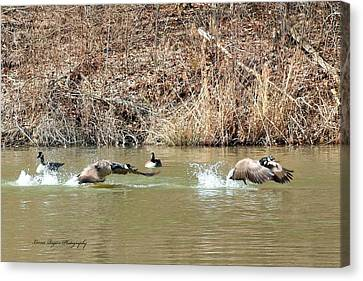 Canvas Print featuring the digital art Wild Goose Chase by Lorna Rogers Photography