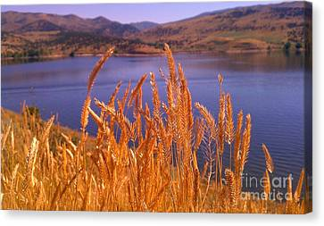 Canvas Print featuring the photograph Wild Grain by Chris Tarpening