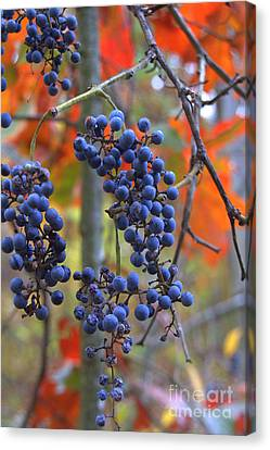 Canvas Print featuring the photograph Wild Grapes by Jim McCain