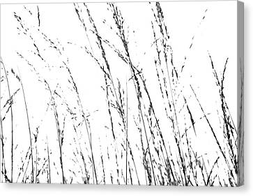 Wild Grasses Abstract Canvas Print by Natalie Kinnear
