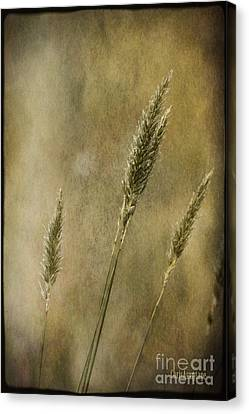 Canvas Print featuring the photograph Wild Grasses by Chris Armytage