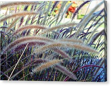 Wild Grasses In Autumn Canvas Print by Ellen Tully